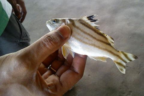 Fish found here!