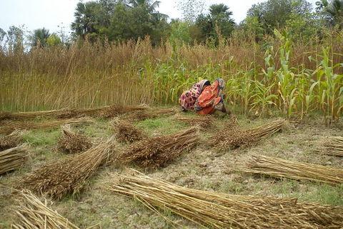 Organic Cultivation2