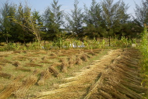 Result we got with organic compost without chemical pesticides and fertilisers